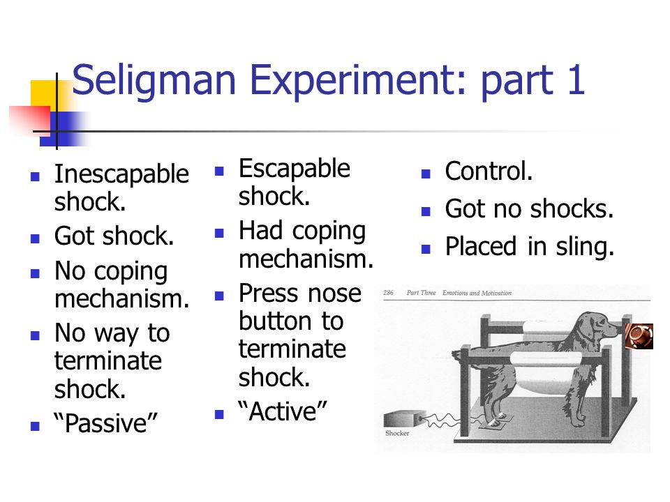 Seligman Experiment: part 1 Escapable shock. Had coping mechanism.