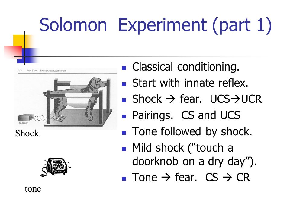 Solomon Experiment (part 1) Classical conditioning.