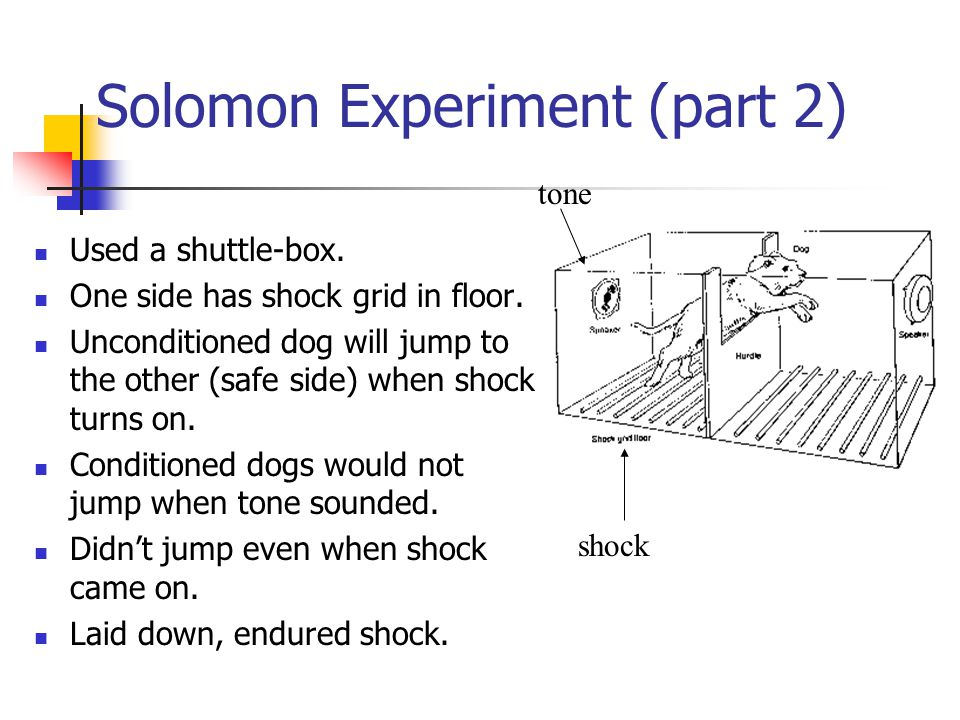Solomon Experiment (part 2) Used a shuttle-box. One side has shock grid in floor.