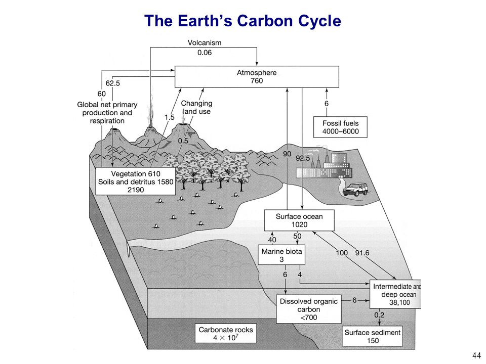 44 The Earth's Carbon Cycle