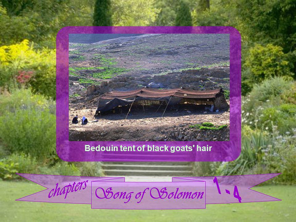 Song of Solomon Bedouin tent of black goats hair
