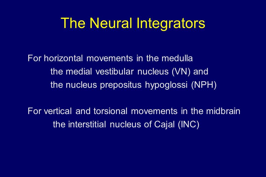 The Neural Integrators For horizontal movements in the medulla the medial vestibular nucleus (VN) and the nucleus prepositus hypoglossi (NPH) For vert