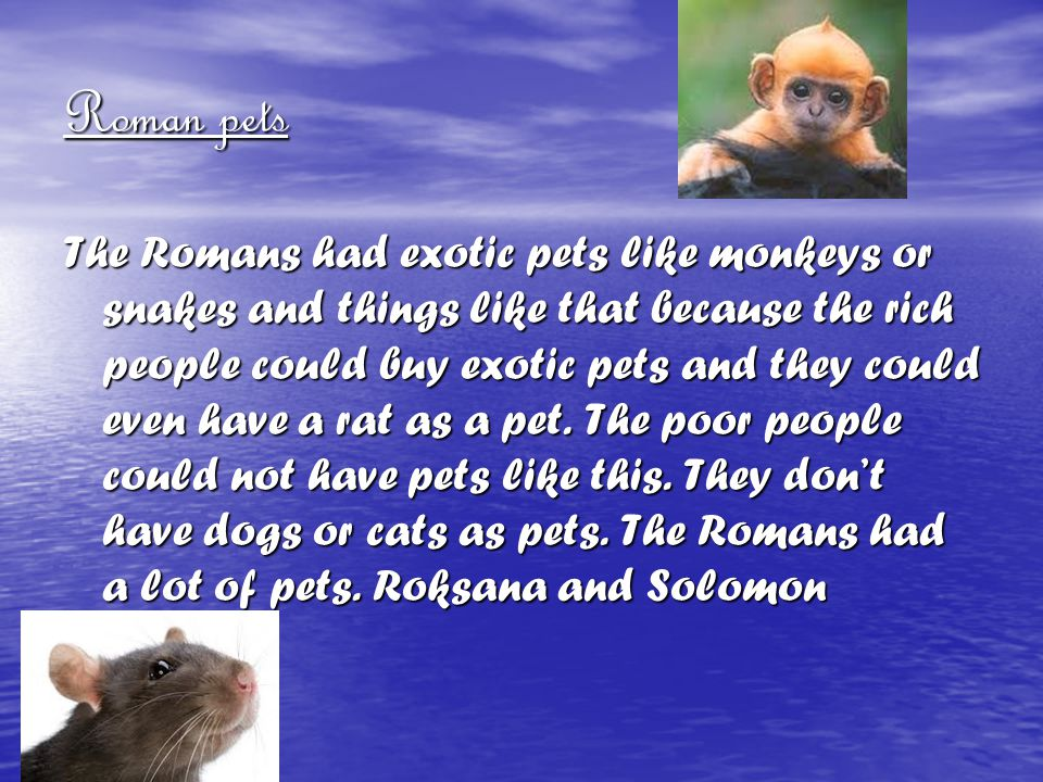 Roman pets The Romans had exotic pets like monkeys or snakes and things like that because the rich people could buy exotic pets and they could even ha