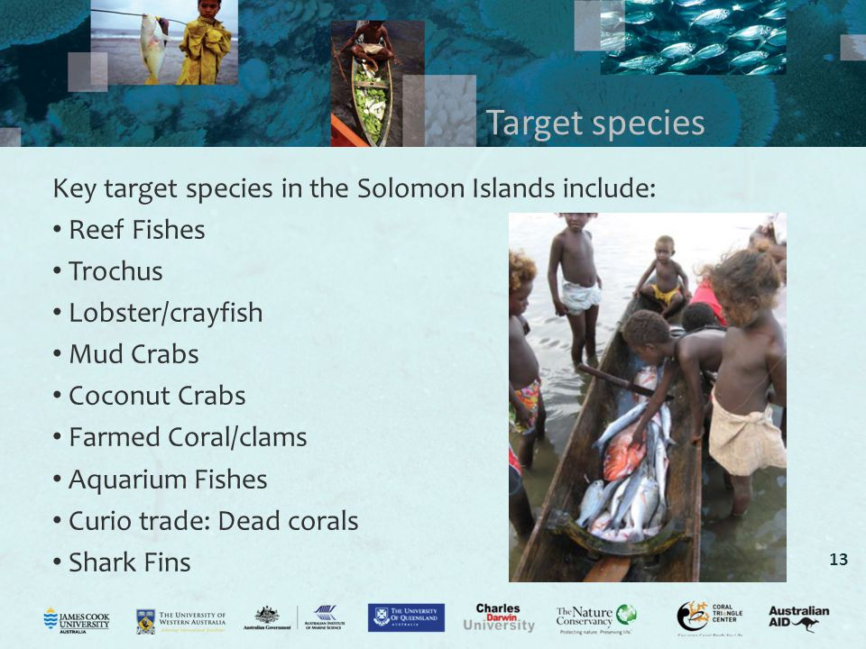 13 Target species Key target species in the Solomon Islands include: Reef Fishes Trochus Lobster/crayfish Mud Crabs Coconut Crabs Farmed Coral/clams Aquarium Fishes Curio trade: Dead corals Shark Fins