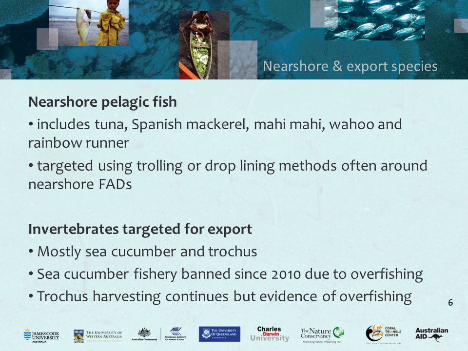 6 Nearshore & export species Nearshore pelagic fish includes tuna, Spanish mackerel, mahi mahi, wahoo and rainbow runner targeted using trolling or drop lining methods often around nearshore FADs Invertebrates targeted for export Mostly sea cucumber and trochus Sea cucumber fishery banned since 2010 due to overfishing Trochus harvesting continues but evidence of overfishing