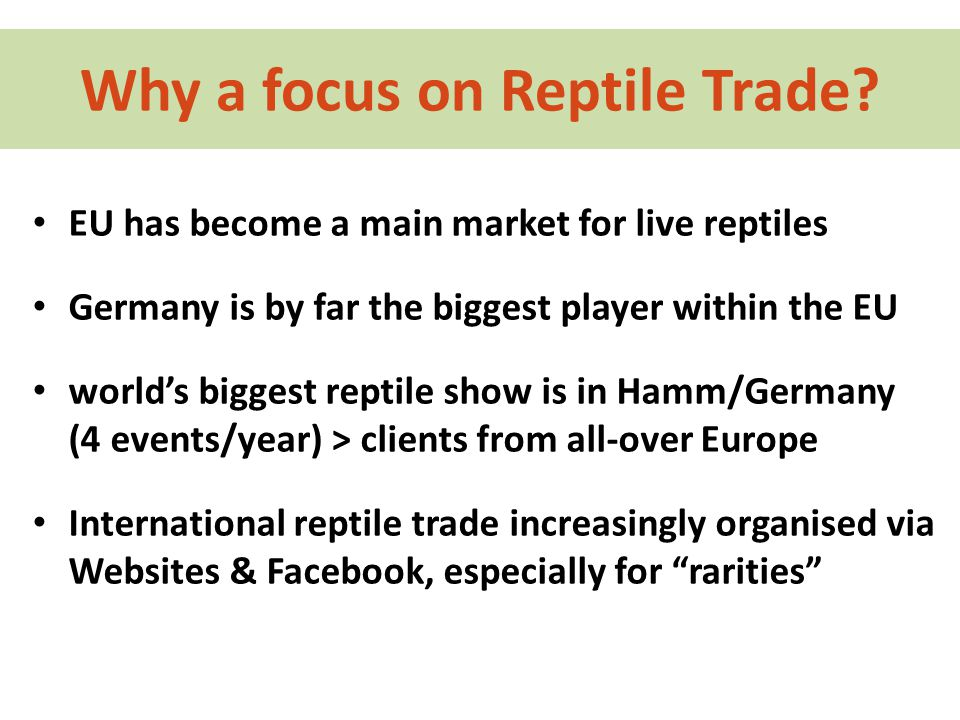 Why a focus on Reptile Trade.