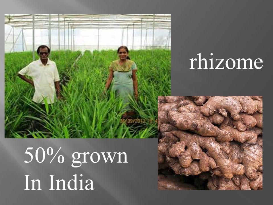 50% grown In India rhizome