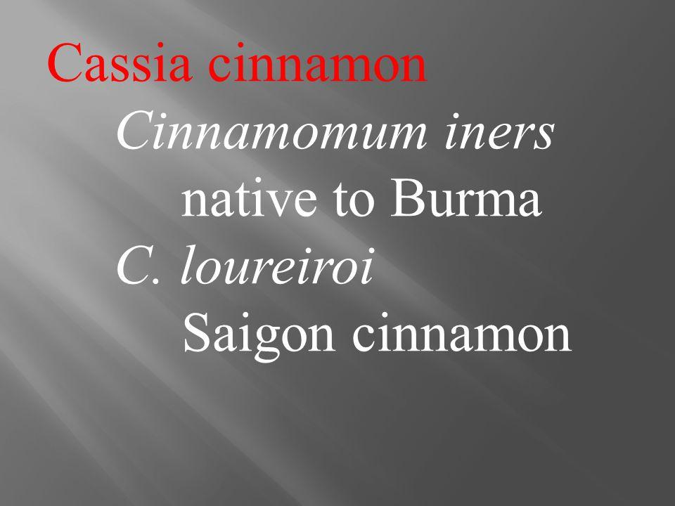 Cassia cinnamon Cinnamomum iners native to Burma C. loureiroi Saigon cinnamon