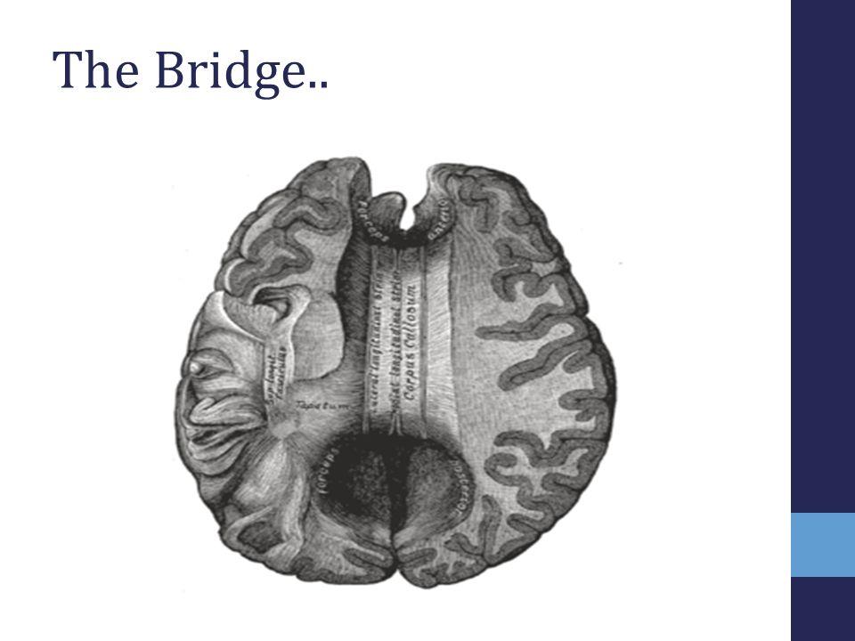 The Bridge..
