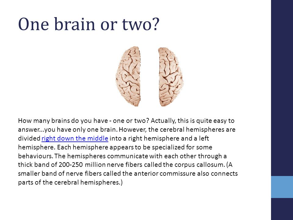 How many brains do you have - one or two? Actually, this is quite easy to answer...you have only one brain. However, the cerebral hemispheres are divi
