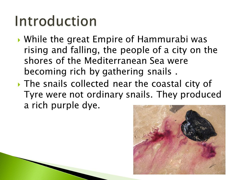  While the great Empire of Hammurabi was rising and falling, the people of a city on the shores of the Mediterranean Sea were becoming rich by gathering snails.