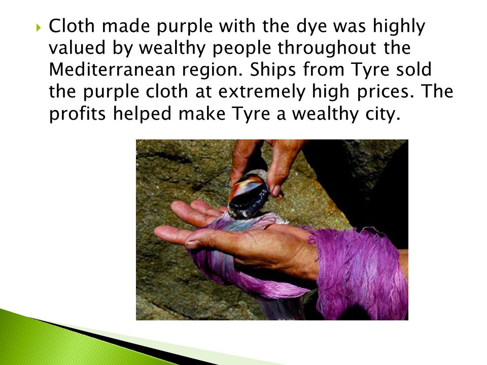  Cloth made purple with the dye was highly valued by wealthy people throughout the Mediterranean region.
