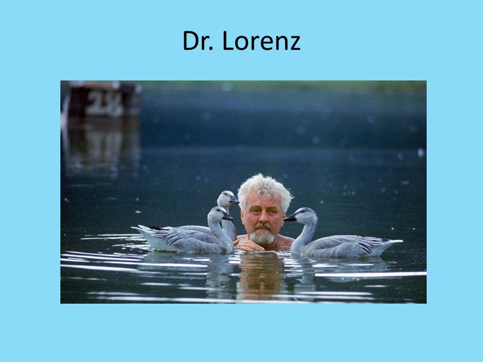 Dr. Lorenz
