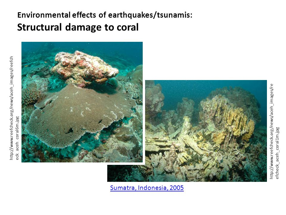 http://www.reefcheck.org/news/aceh_images/reefch eck_aceh_coral6m.jpg Environmental effects of earthquakes/tsunamis: Structural damage to coral http:/