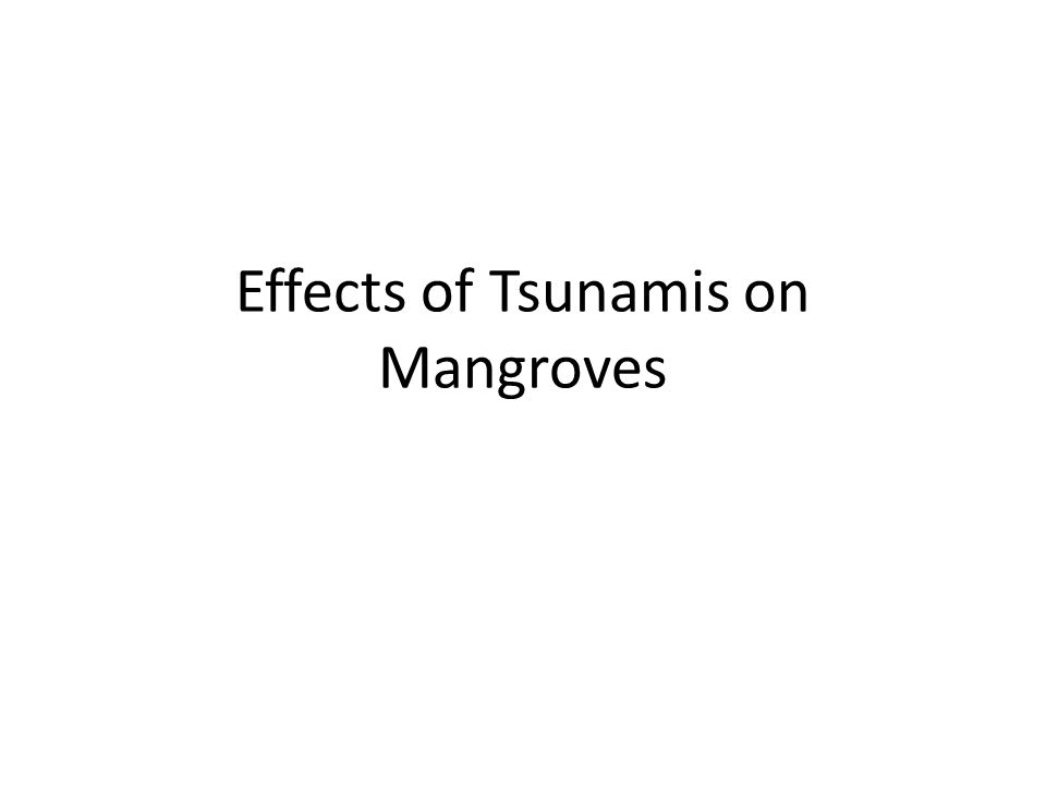 Effects of Tsunamis on Mangroves