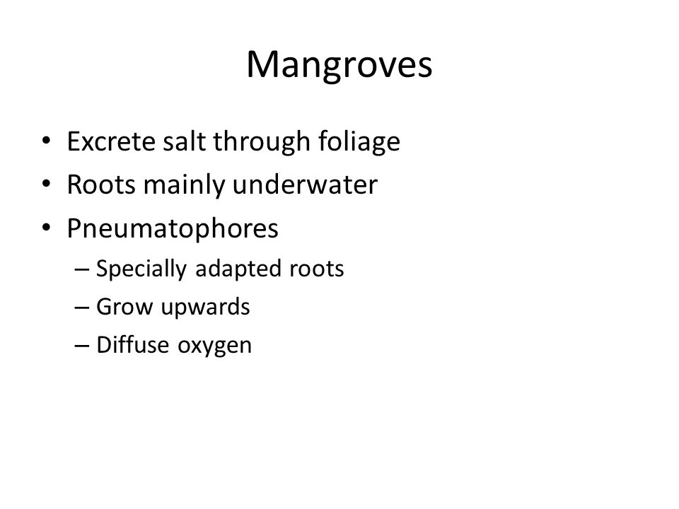 Mangroves Excrete salt through foliage Roots mainly underwater Pneumatophores – Specially adapted roots – Grow upwards – Diffuse oxygen