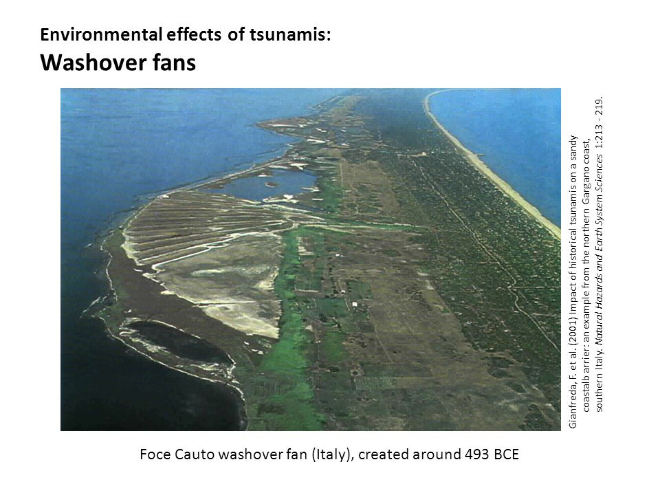 Environmental effects of tsunamis: Washover fans Gianfreda, F. et al. (2001) Impact of historical tsunamis on a sandy coastalb arrier: an example from