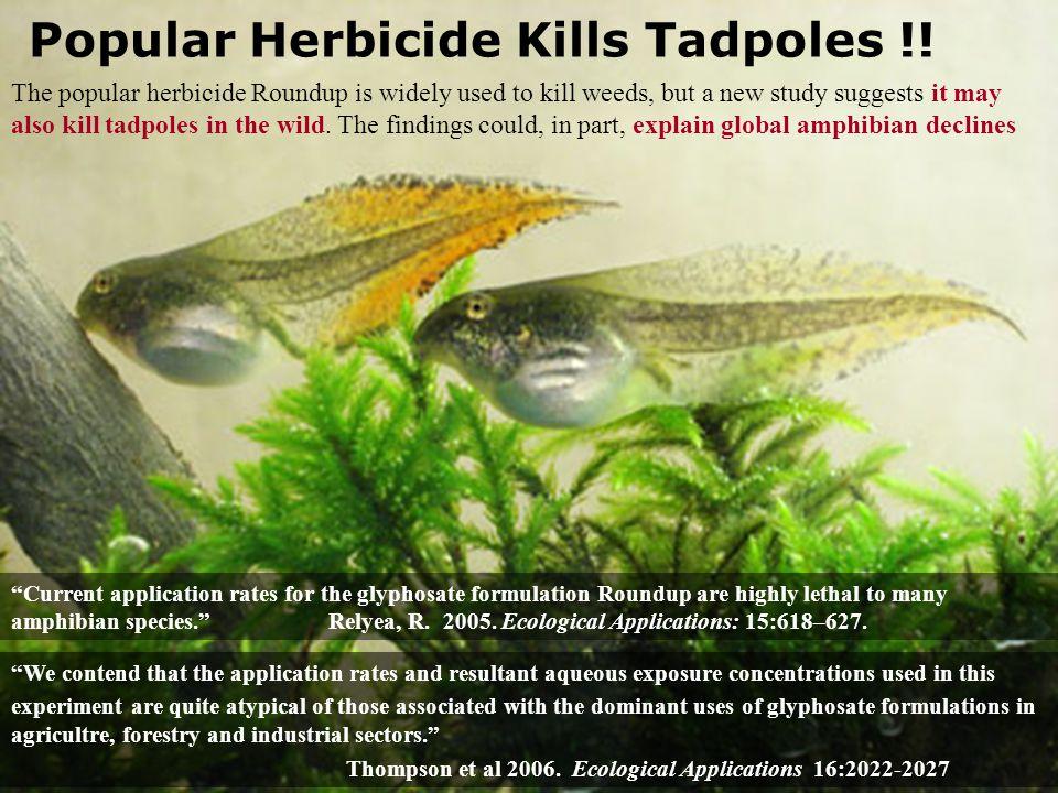 Popular Herbicide Kills Tadpoles !.