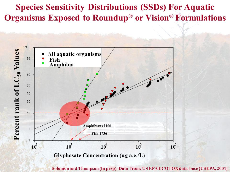 Glyphosate Concentration (µg a.e./L) 10 2 3 4 5 6 Percent rank of LC 50 Values 0.1 1 10 30 50 70 90 99 99.9 All aquatic organisms Fish Amphibia Species Sensitivity Distributions (SSDs) For Aquatic Organisms Exposed to Roundup ® or Vision ® Formulations Solomon and Thompson (In prep) Data from: US EPA ECOTOX data-base {USEPA, 2001} Amphibians 1100 Fish 1736