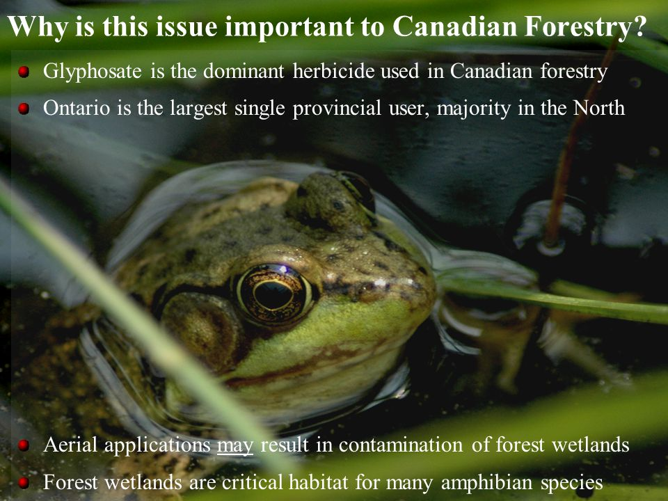 Why is this issue important to Canadian Forestry.