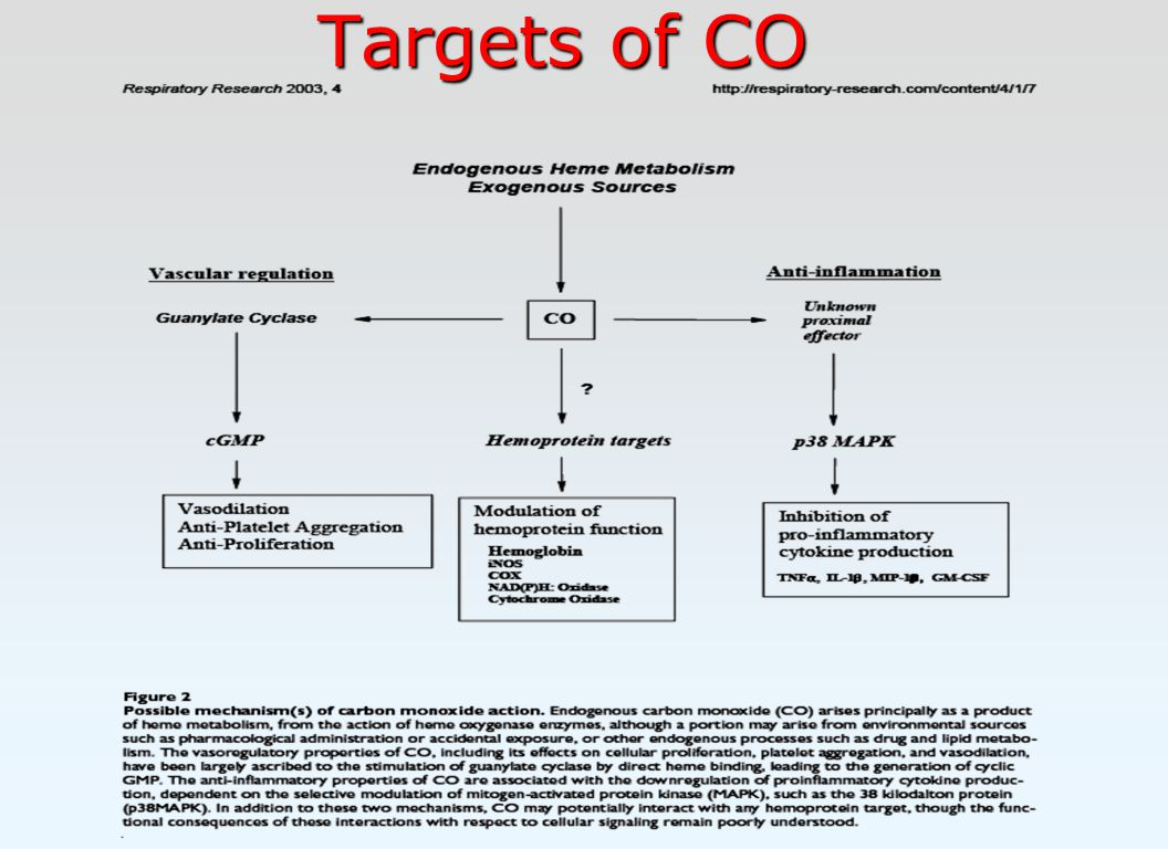 Targets of CO