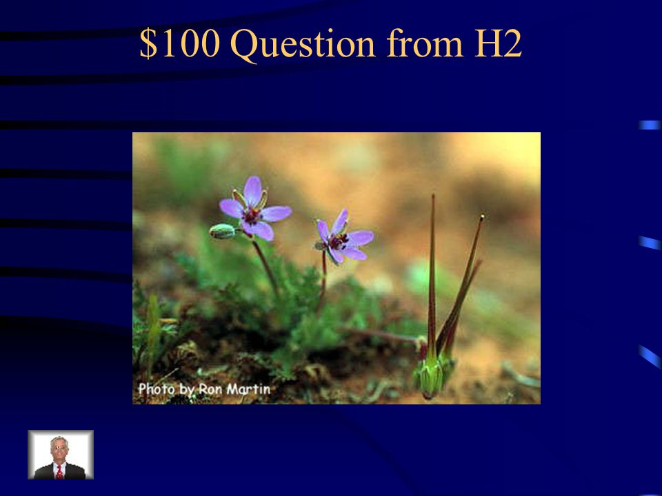 $500 Answer from H1 What is death camas