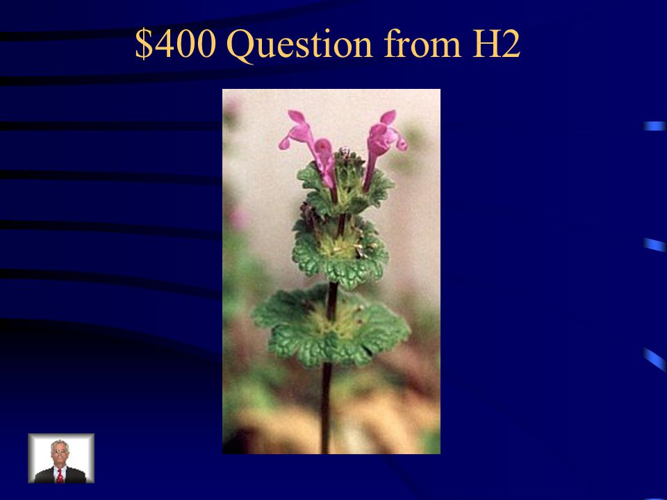 $300 Answer from H2 What is sheep sorrel