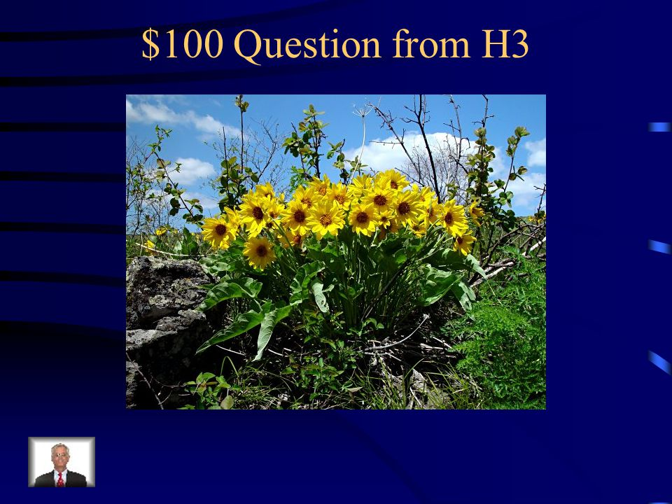 $500 Answer from H2 What is showy phlox
