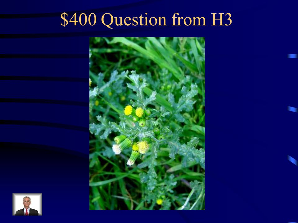 $300 Answer from H3 What is pineappleweed