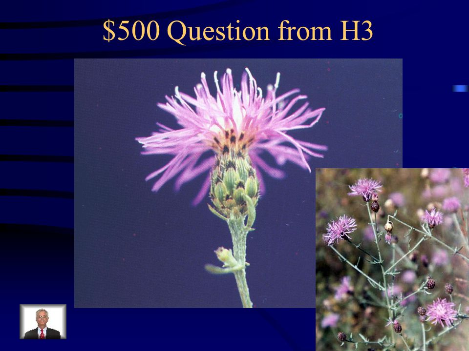 $400 Answer from H3 What is common groundsel?