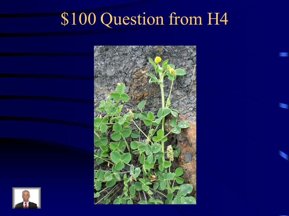 $500 Answer from H3 What is spotted knapweed