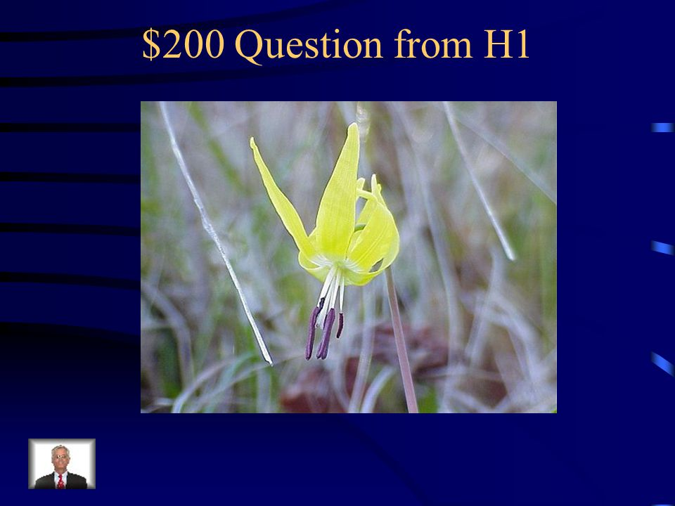 $100 Answer from H1 What is a trillium