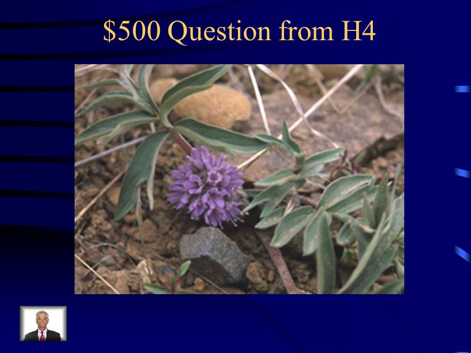 $400 Answer from H4 What is biscuitroot?