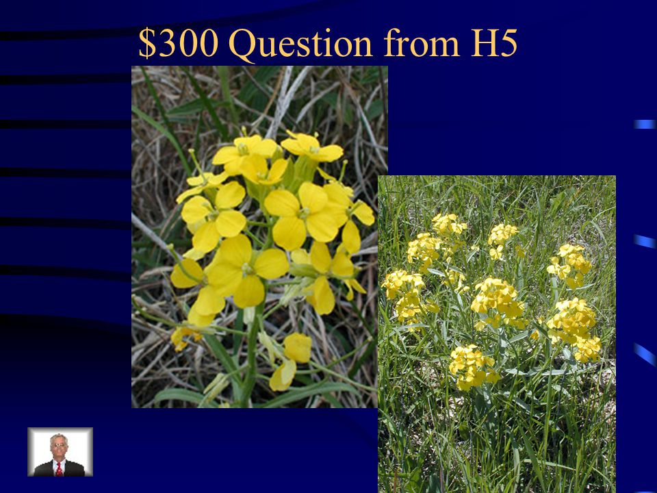 $200 Answer from H5 What is shepherd's purse
