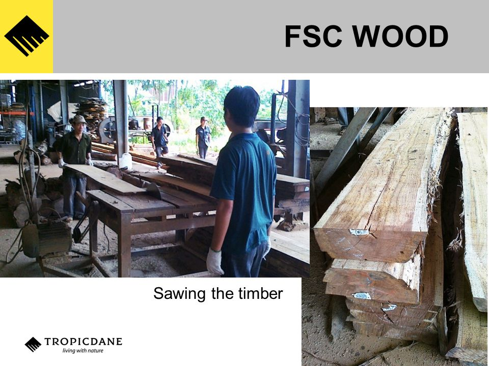 Sawing the timber FSC WOOD