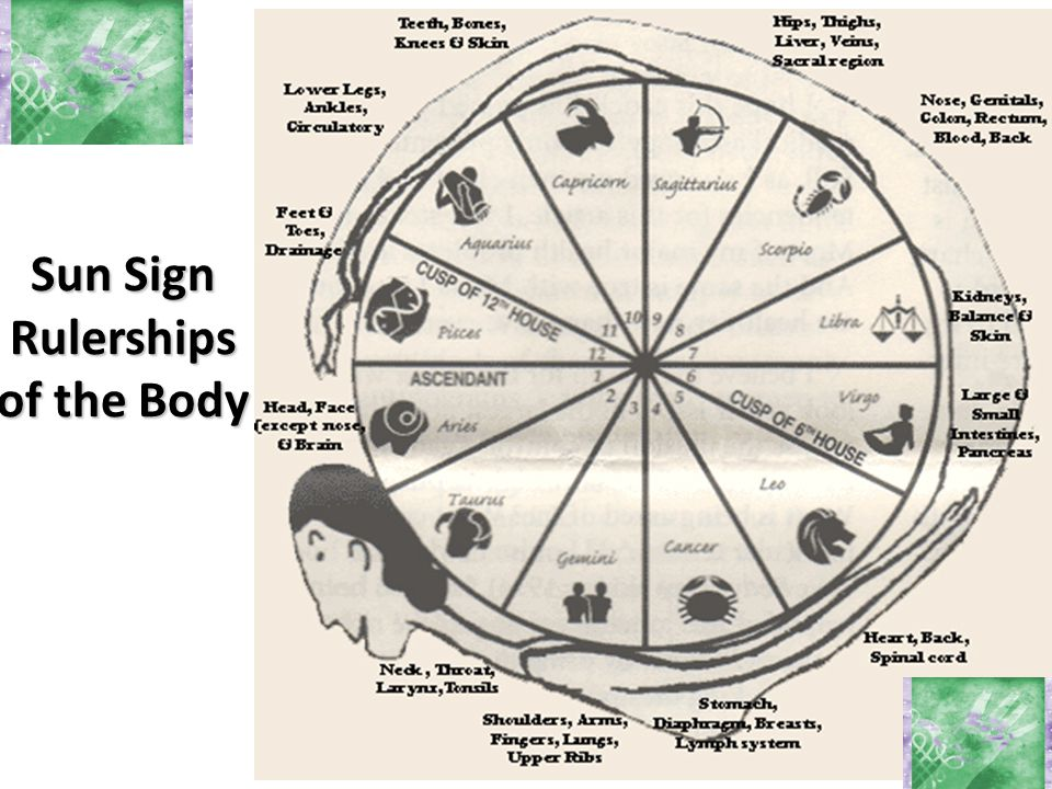 Sun Sign Rulerships of the Body