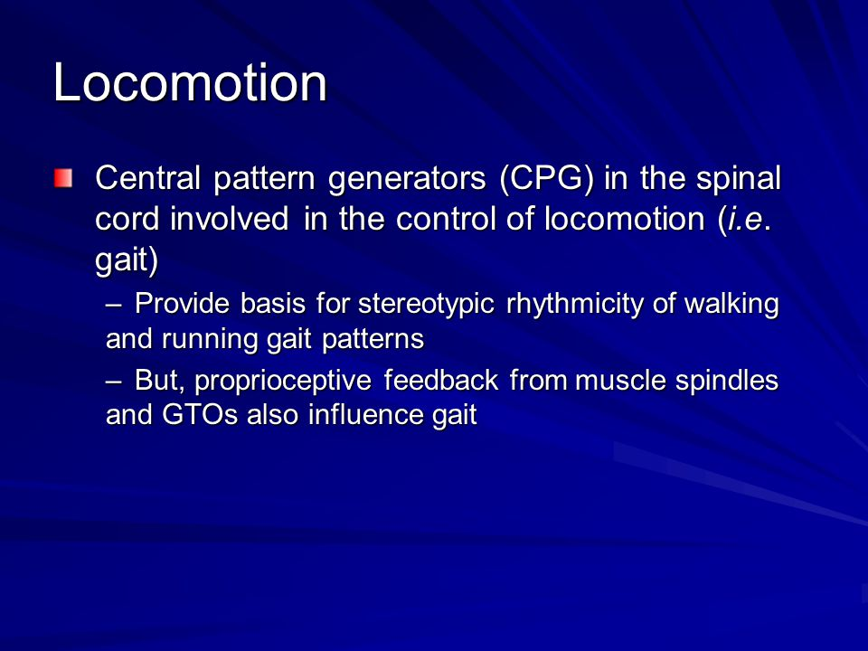 Locomotion Central pattern generators (CPG) in the spinal cord involved in the control of locomotion (i.e.