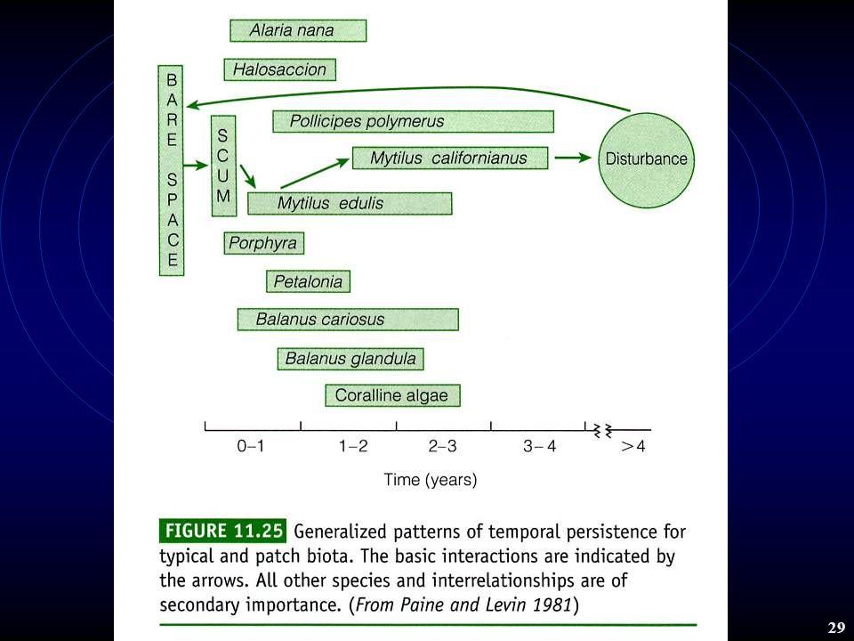 生態學 2001 chap.11 Community structure 28 範例: mussel community The structure os the community over time is determined by the combined forces of competitive interactions and physical disturbance.
