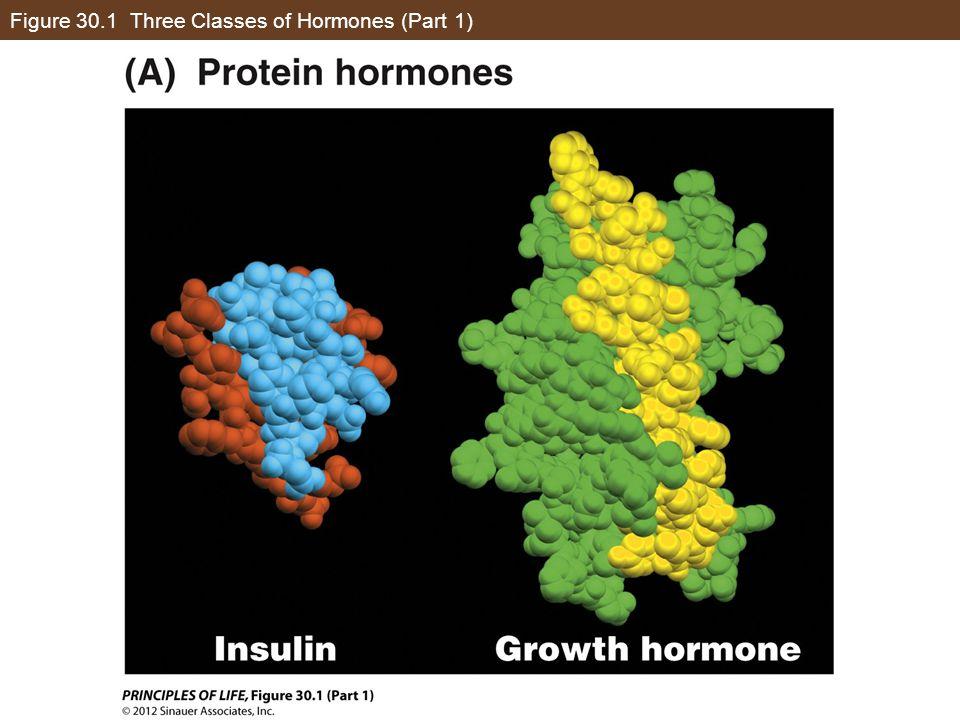 Figure 30.1 Three Classes of Hormones (Part 1)