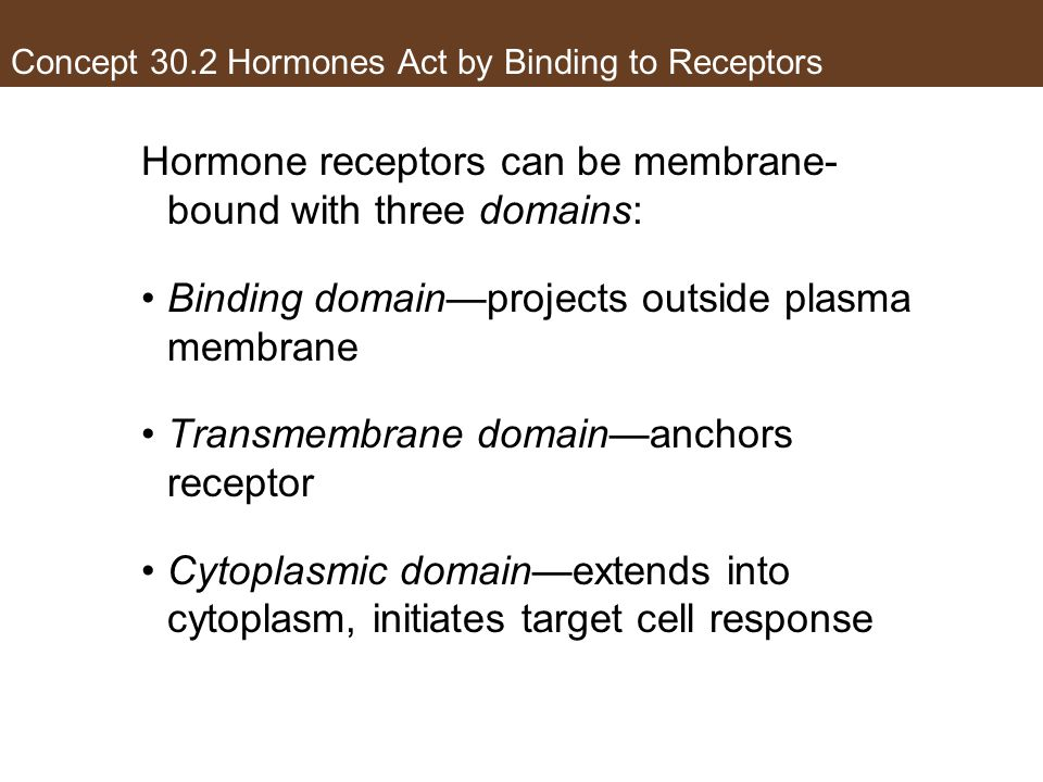Concept 30.2 Hormones Act by Binding to Receptors Hormone receptors can be membrane- bound with three domains: Binding domain—projects outside plasma