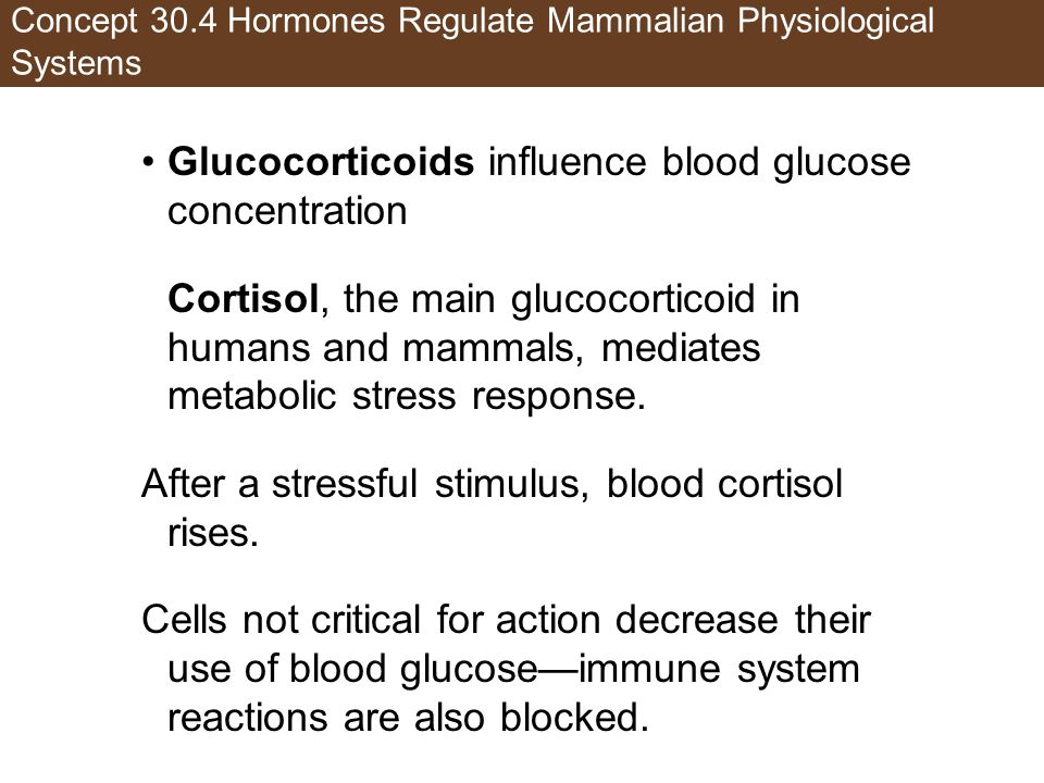 Concept 30.4 Hormones Regulate Mammalian Physiological Systems Glucocorticoids influence blood glucose concentration Cortisol, the main glucocorticoid