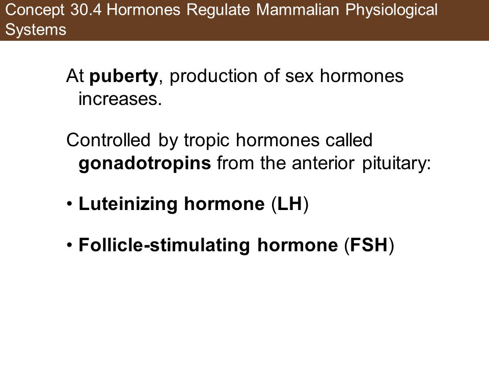 Concept 30.4 Hormones Regulate Mammalian Physiological Systems At puberty, production of sex hormones increases. Controlled by tropic hormones called