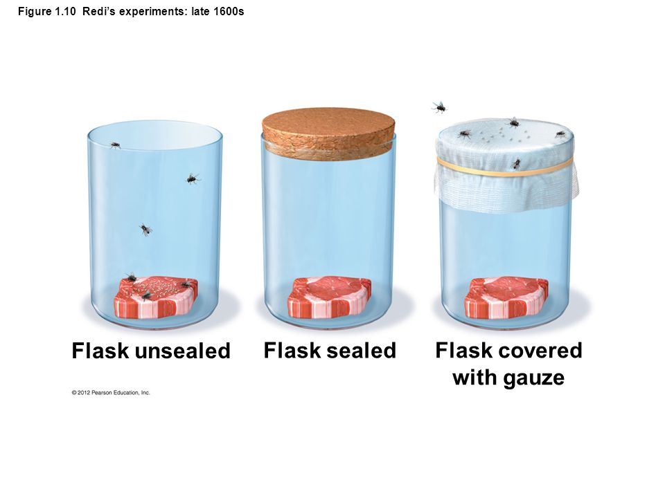 Figure 1.10 Redi's experiments: late 1600s Flask unsealed Flask sealed Flask covered with gauze