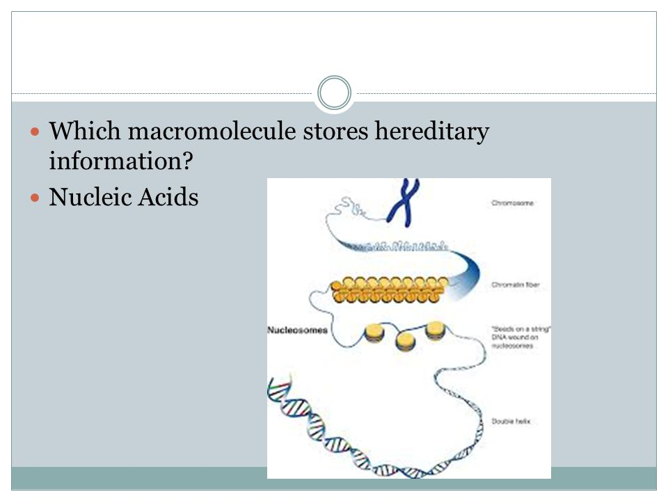 Which macromolecule stores hereditary information? Nucleic Acids