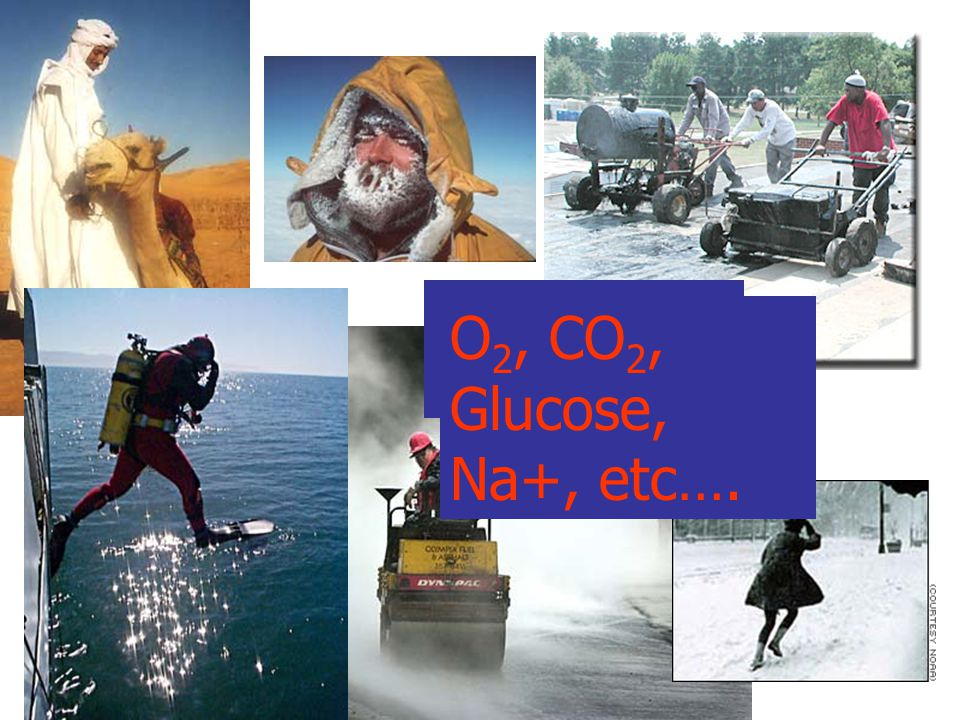 ~37 o C O 2, CO 2, Glucose, Na+, etc….