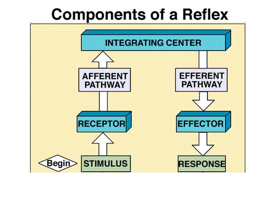Negative feedback Negative Feedback Loop; response is in opposite direction of the disturbance.