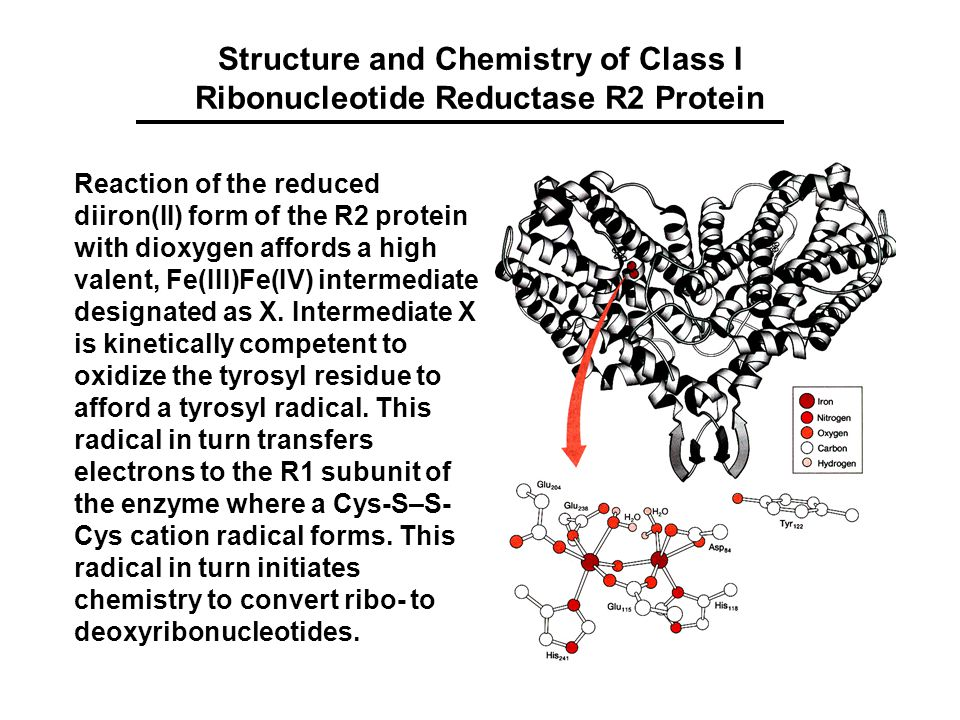 Structure and Chemistry of Class I Ribonucleotide Reductase R2 Protein Reaction of the reduced diiron(II) form of the R2 protein with dioxygen affords a high valent, Fe(III)Fe(IV) intermediate designated as X.