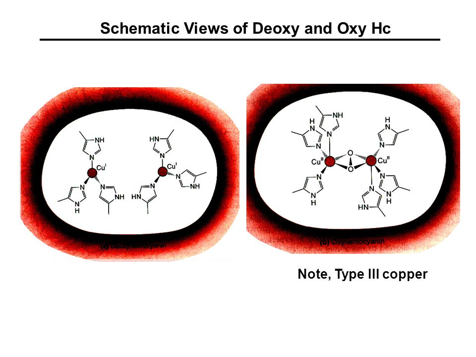 Schematic Views of Deoxy and Oxy Hc Note, Type III copper