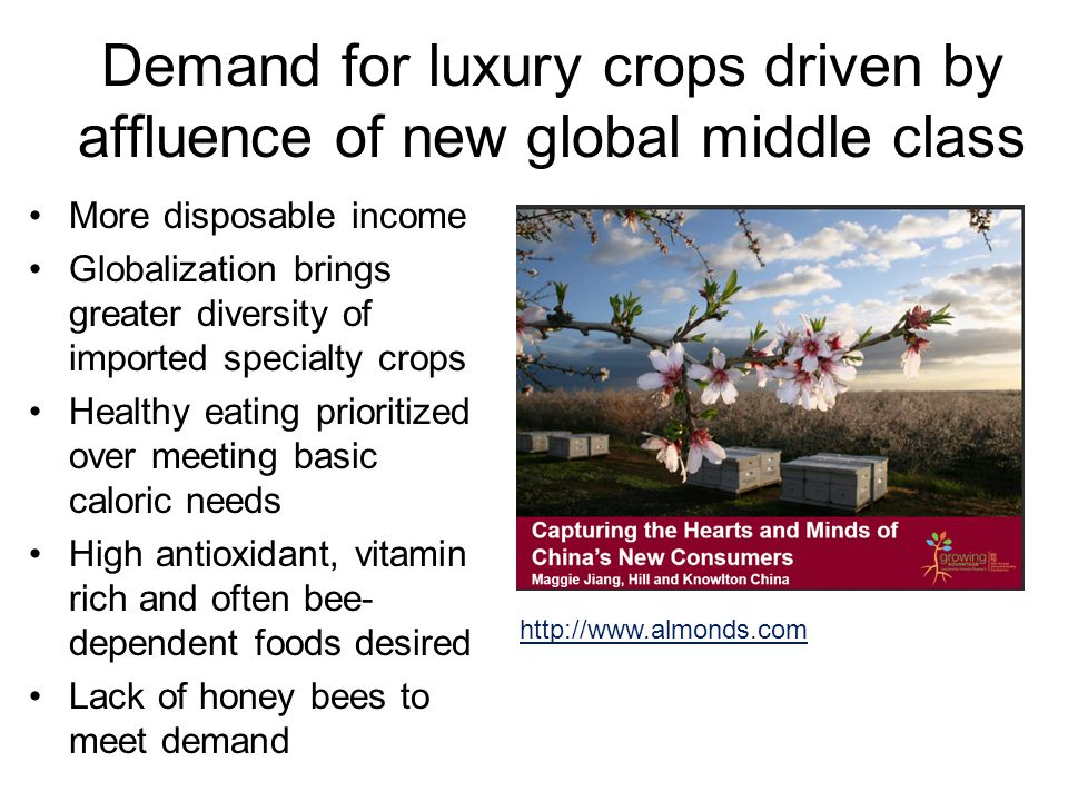 Demand for luxury crops driven by affluence of new global middle class More disposable income Globalization brings greater diversity of imported specialty crops Healthy eating prioritized over meeting basic caloric needs High antioxidant, vitamin rich and often bee- dependent foods desired Lack of honey bees to meet demand http://www.almonds.com