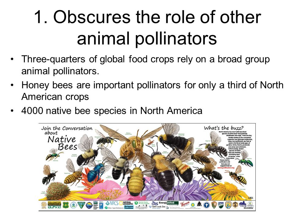 1. Obscures the role of other animal pollinators Three-quarters of global food crops rely on a broad group animal pollinators. Honey bees are importan